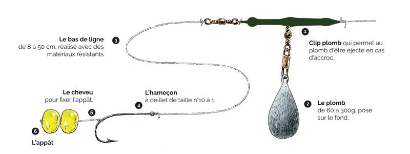 Schéma de montage de ligne pour pêche de la carpe